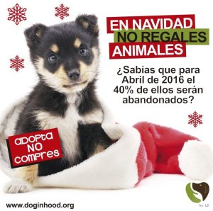 No compres perros, adopta