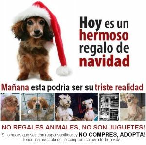 No compres perros , adopta