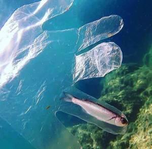 La contaminación de los mares